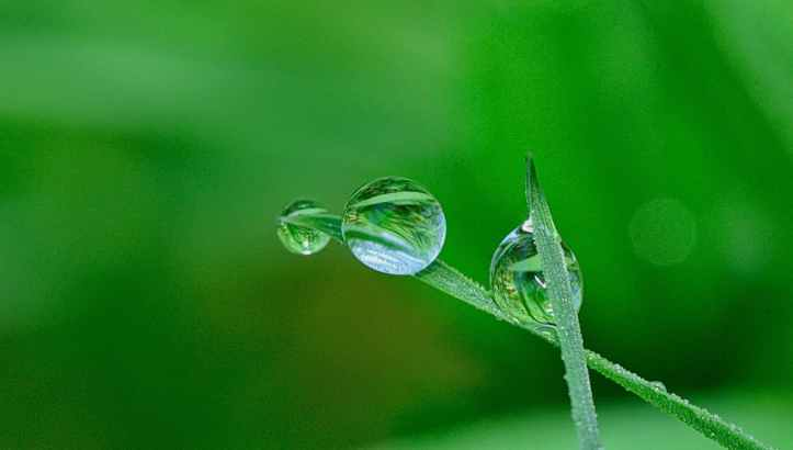 clear close up dew droplet