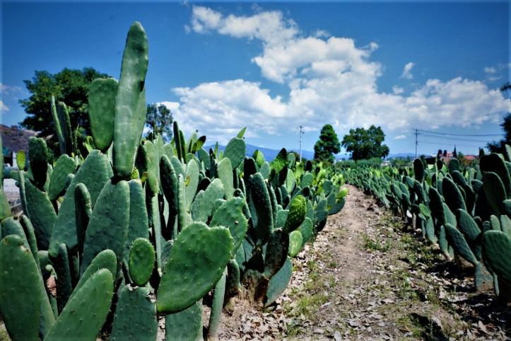 BIOGAS MEXICO.jpg