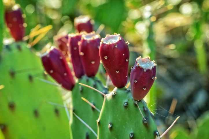 blur botanical cacti cactus