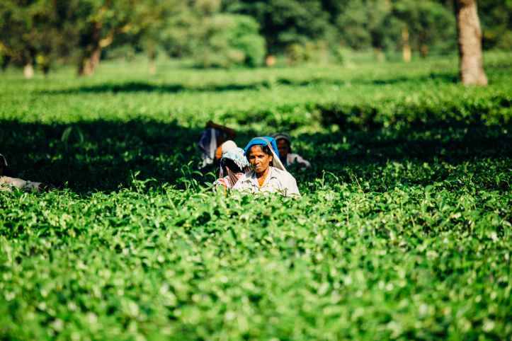 photo of people on a cropland