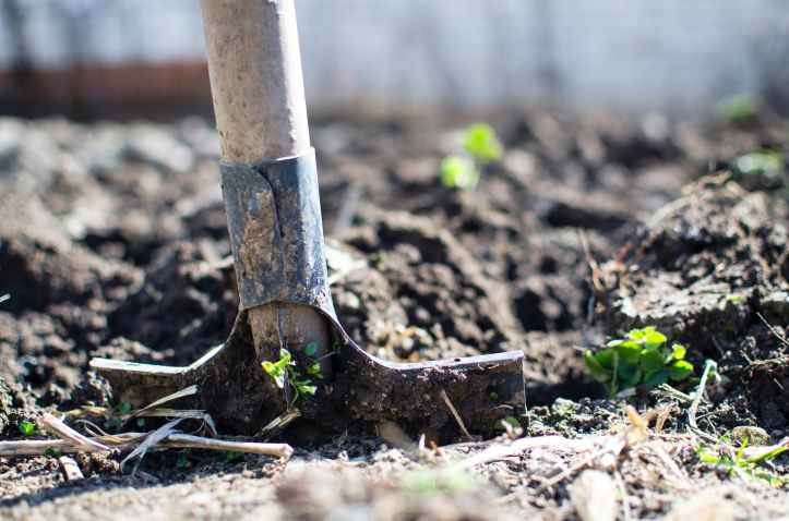agriculture backyard blur close up